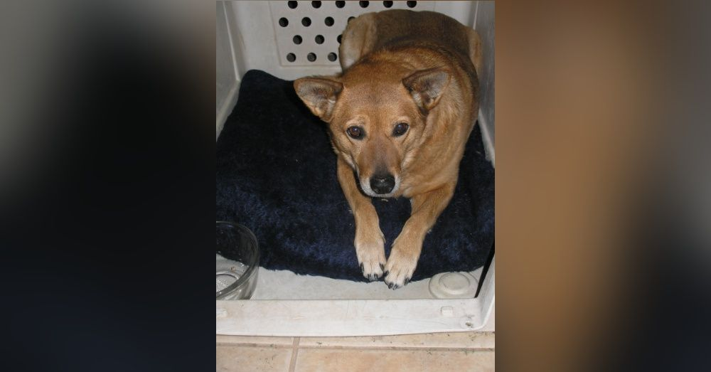 Grateful Rescue Dog Goes On To Save Her Human Twice Rescue Dogs Dogs Poor Dog