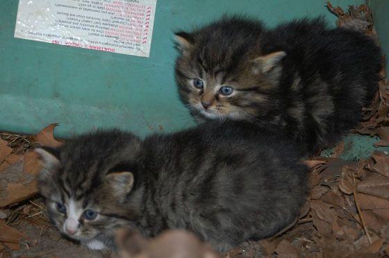 dog finds feral kittens under boat