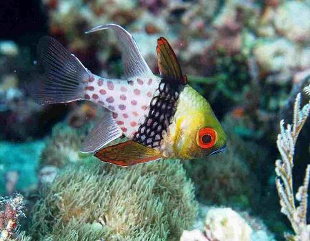 All About Fish Underwater Fish Tropical Freshwater Fish Fish Pet