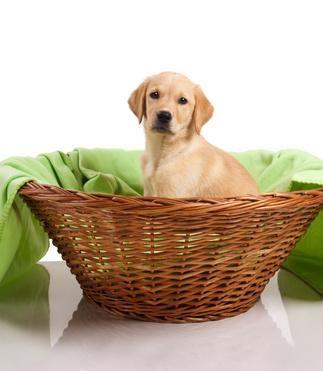 http://ift.tt/2qd1DfD How To Handle Labrador Retriever Dog Anxiety