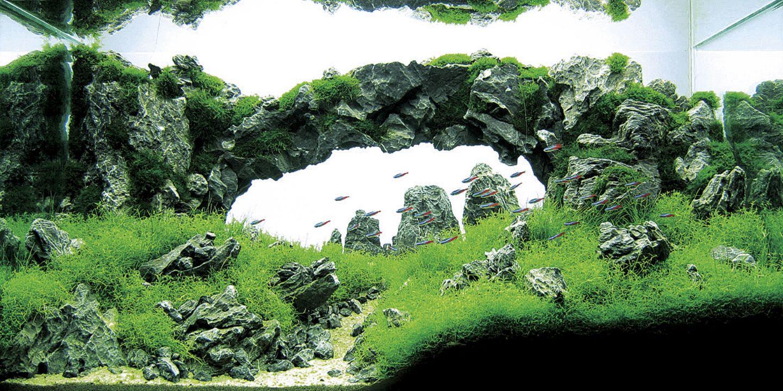 takashi amano fish tanks - aquascaping | arquitecture/interiors
