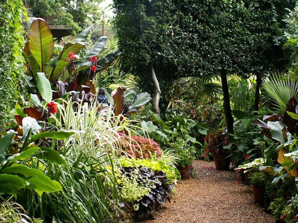 Exotical garden recherche google jardin actuel for Jardin tropical plantas