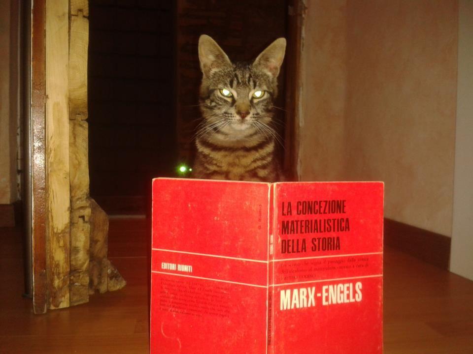 Katzen aller Länder vereinigt Euch!