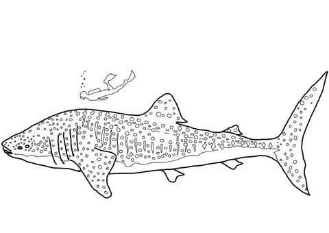Whale Shark Coloring Page Shark Coloring Pages Whale Shark Whale Coloring Pages