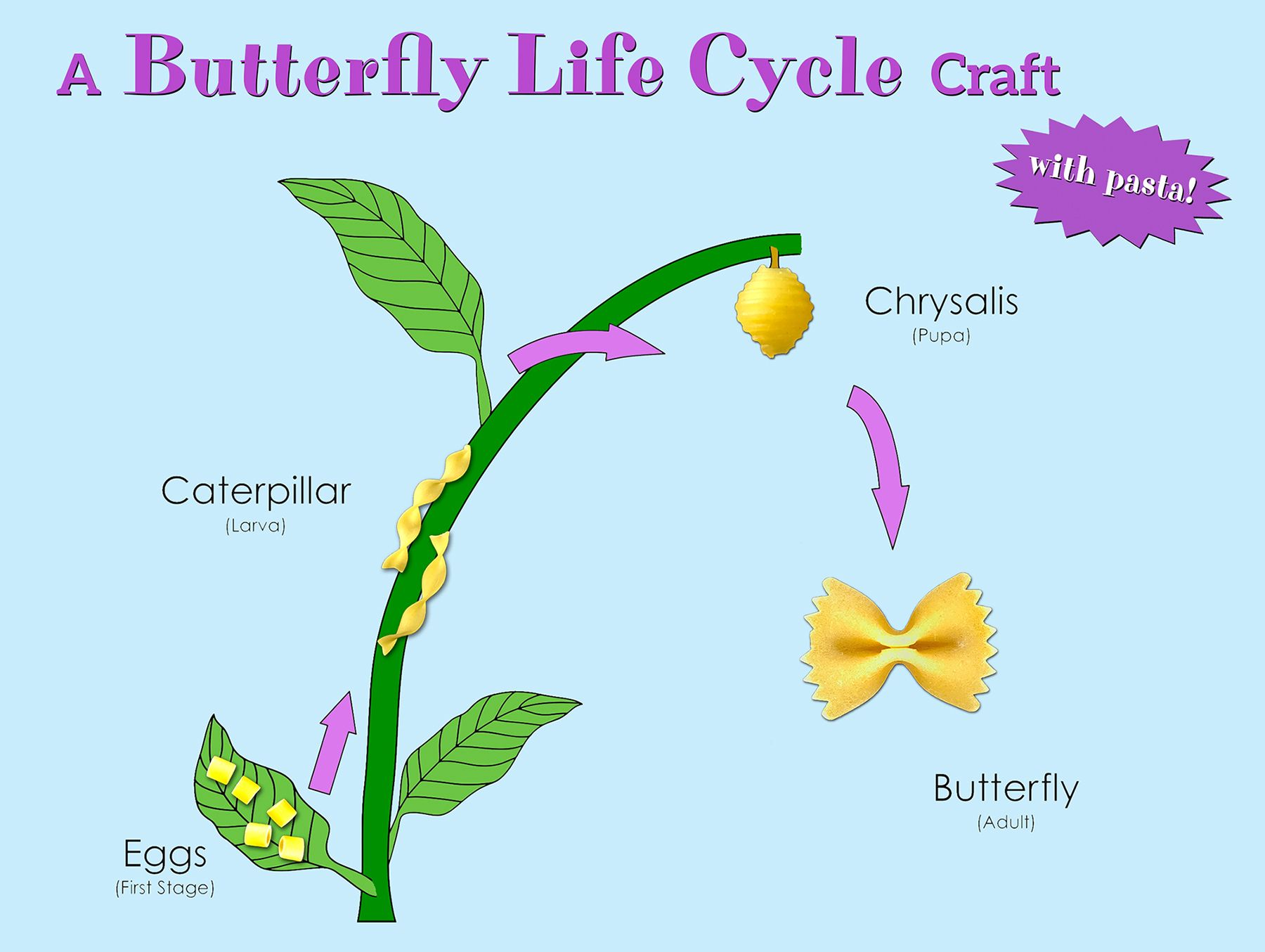 Life Cycle Of A Butterfly Activity
