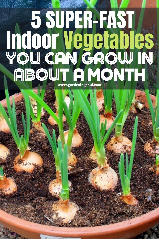 5 Super Fast Indoor Vegetables You Can Grow In About A Month In 2020 Indoor Vegetables Vegetable Garden Diy Vegetables