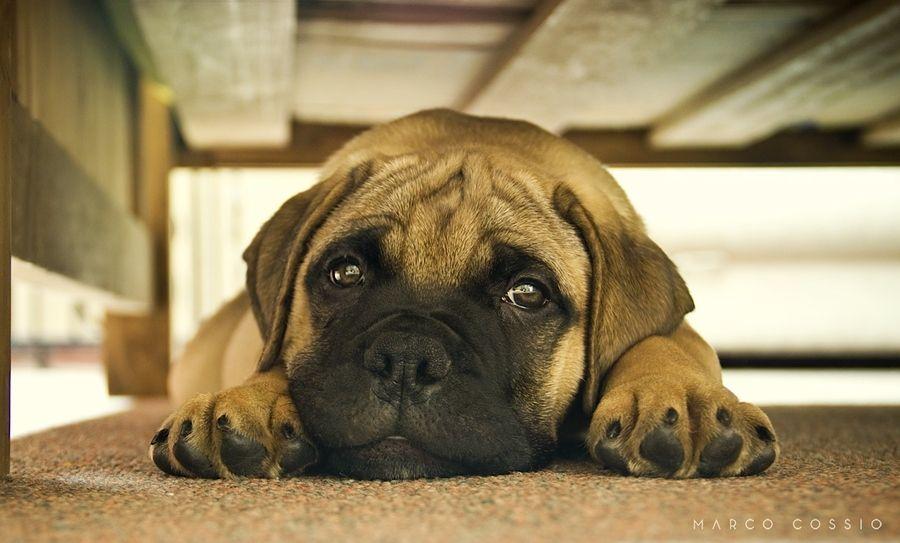 cute puppy DOF