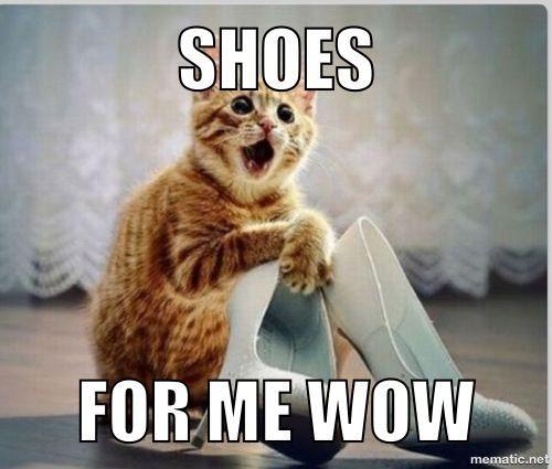 Shooooooooooooooooes Cute Cat Memes Funny Cat Memes Cat Memes
