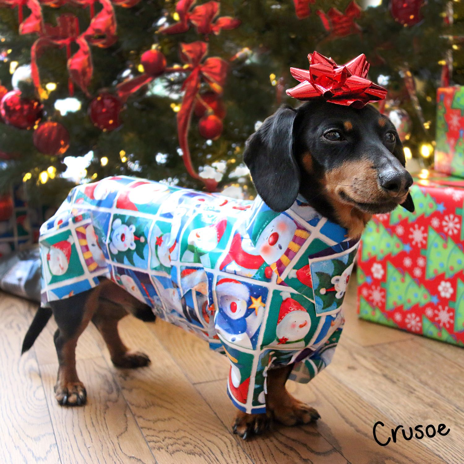 Puppy Dachshund Wrapped In Wrapping Paper Dachshund Dog Cute