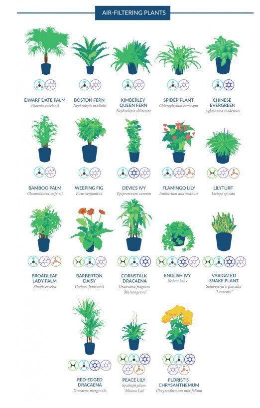 Risultati immagini per piante che depurano gli uffici TECO MILANO