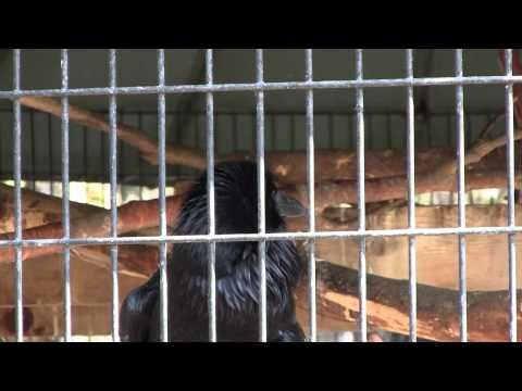 Raven Sounds 1 - YouTube