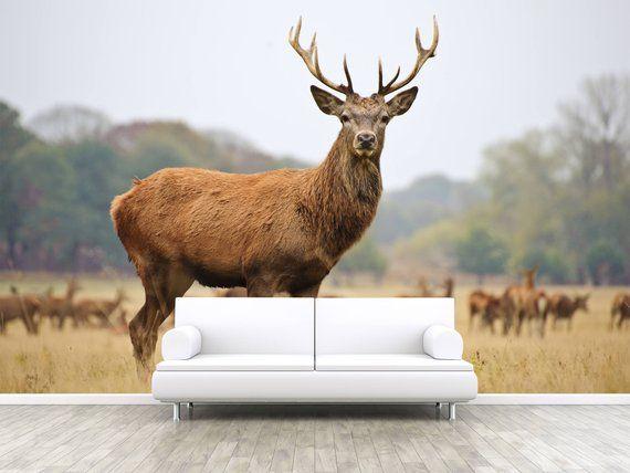 Red Deer at Meadow Photo Wallpaper. Red Deer in the Field