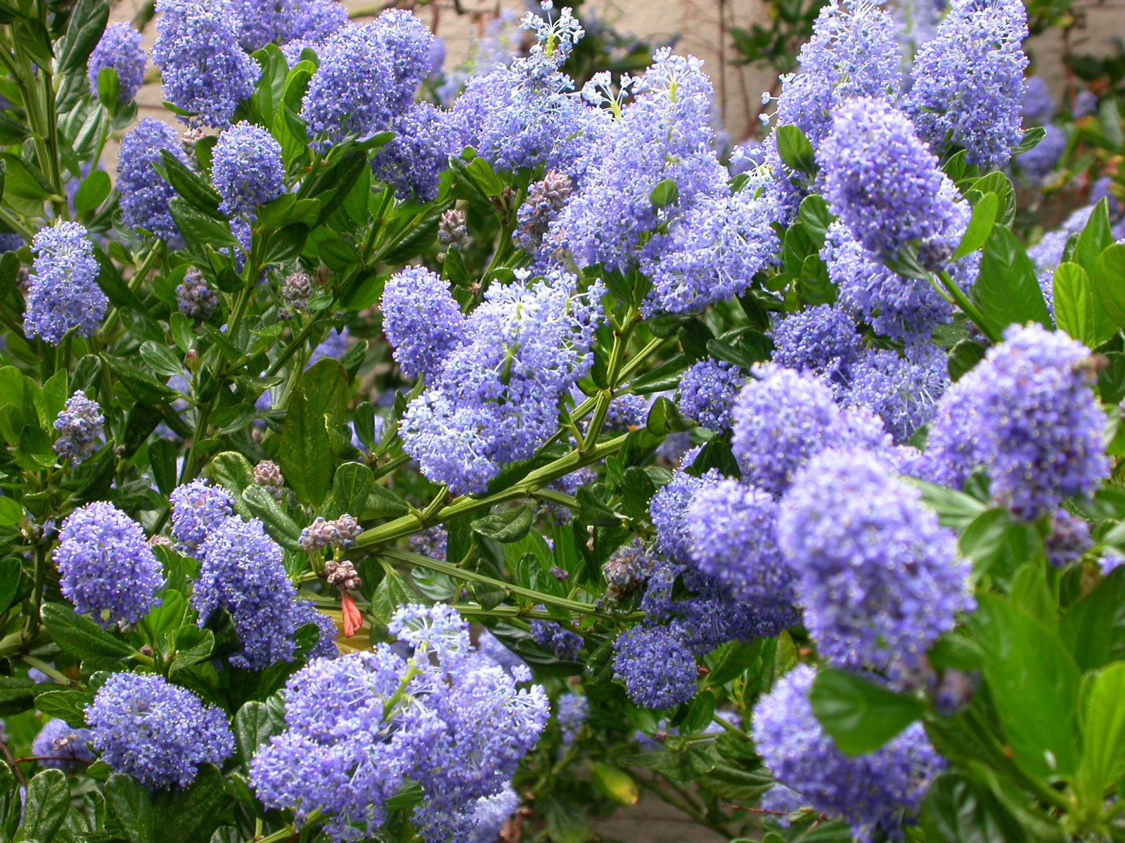 The 10 Best Plants For Your Pacific Northwest Garden 400 x 300