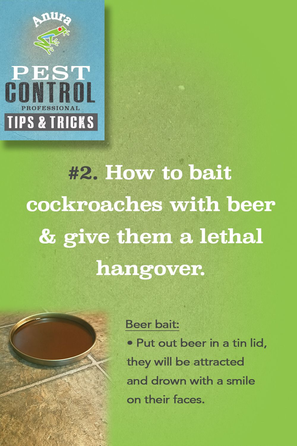 How to bait cockroaches with beer and give them a lethal