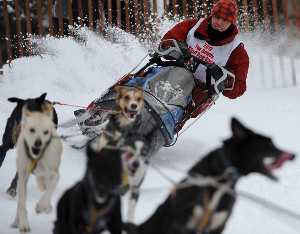 Iditarod Trail Sled Dog Race 2012 Dogs, Sled, Husky pics