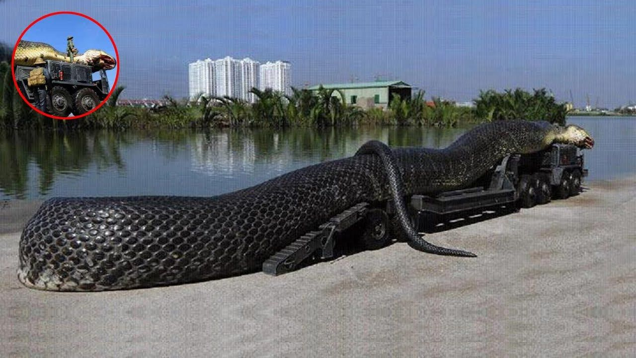 7 Biggest Snakes Ever Found With Images World Biggest Snake