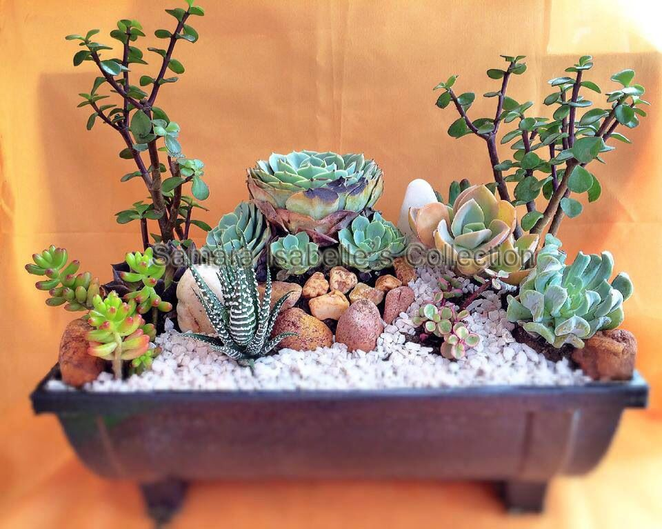 Succulent Dish Garden in Philippines by Frechz