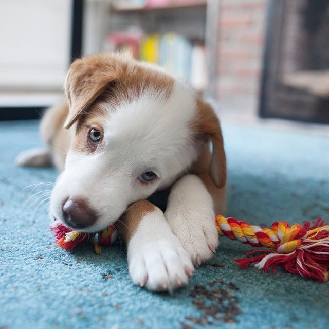 Where Can I Get A Puppy Manicure Around Here Writes Lucky Leela