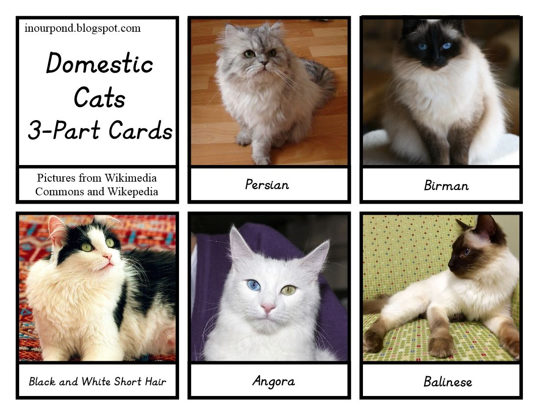In Our Pond: Cat Toob 3-part Cards