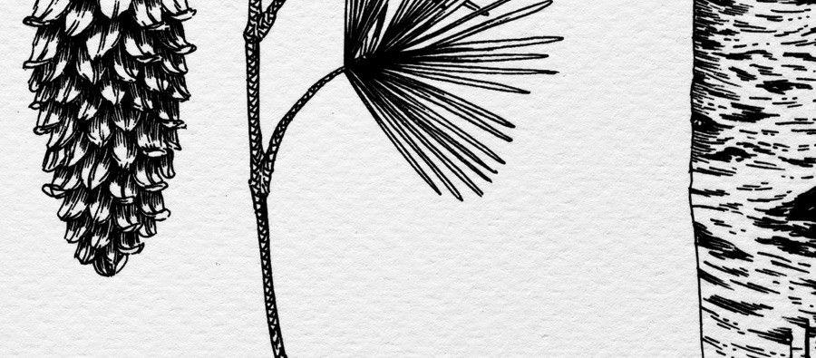 Kaufmann Mercantile Botanical Print By Lucy Engelman