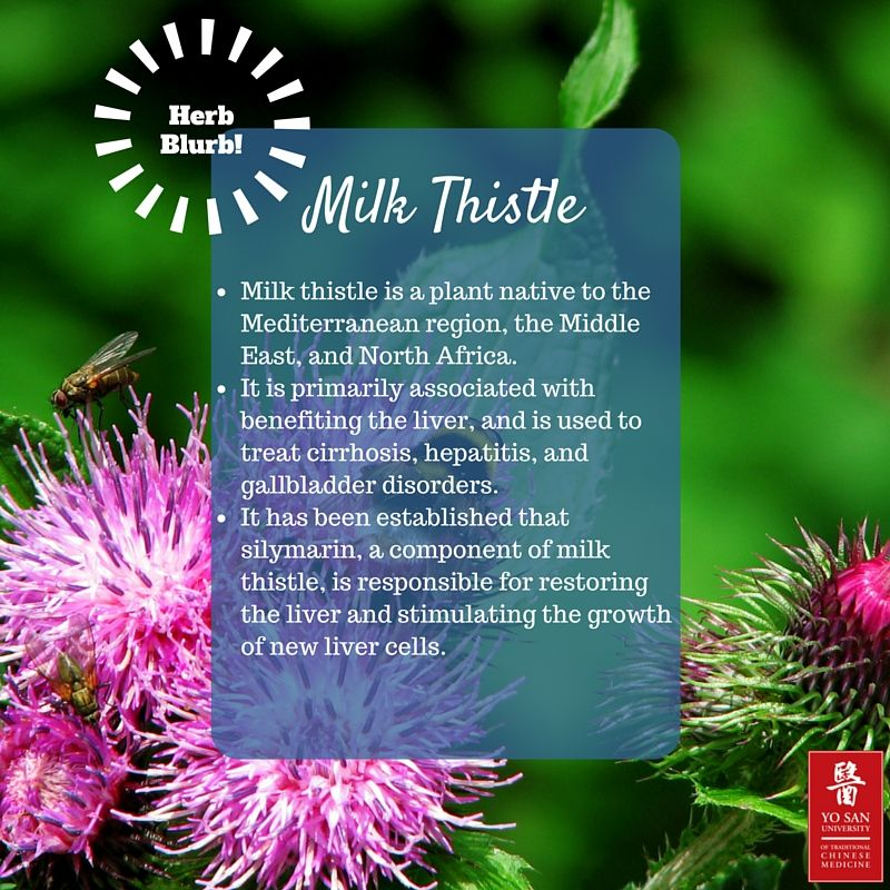 It's officially spring!  Start the season the right way by adding milk thistle (which helps detoxify the liver) to your diet. It can be cooked as a substitute for spinach or added to your salad! #tcm #acupuncture #herbblurb #yosanuniversity