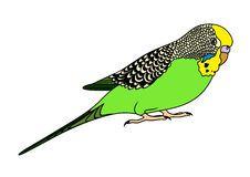 clipart perruche recherche google clipart pinterest google rh pinterest ie green parakeet clipart green parakeet clipart