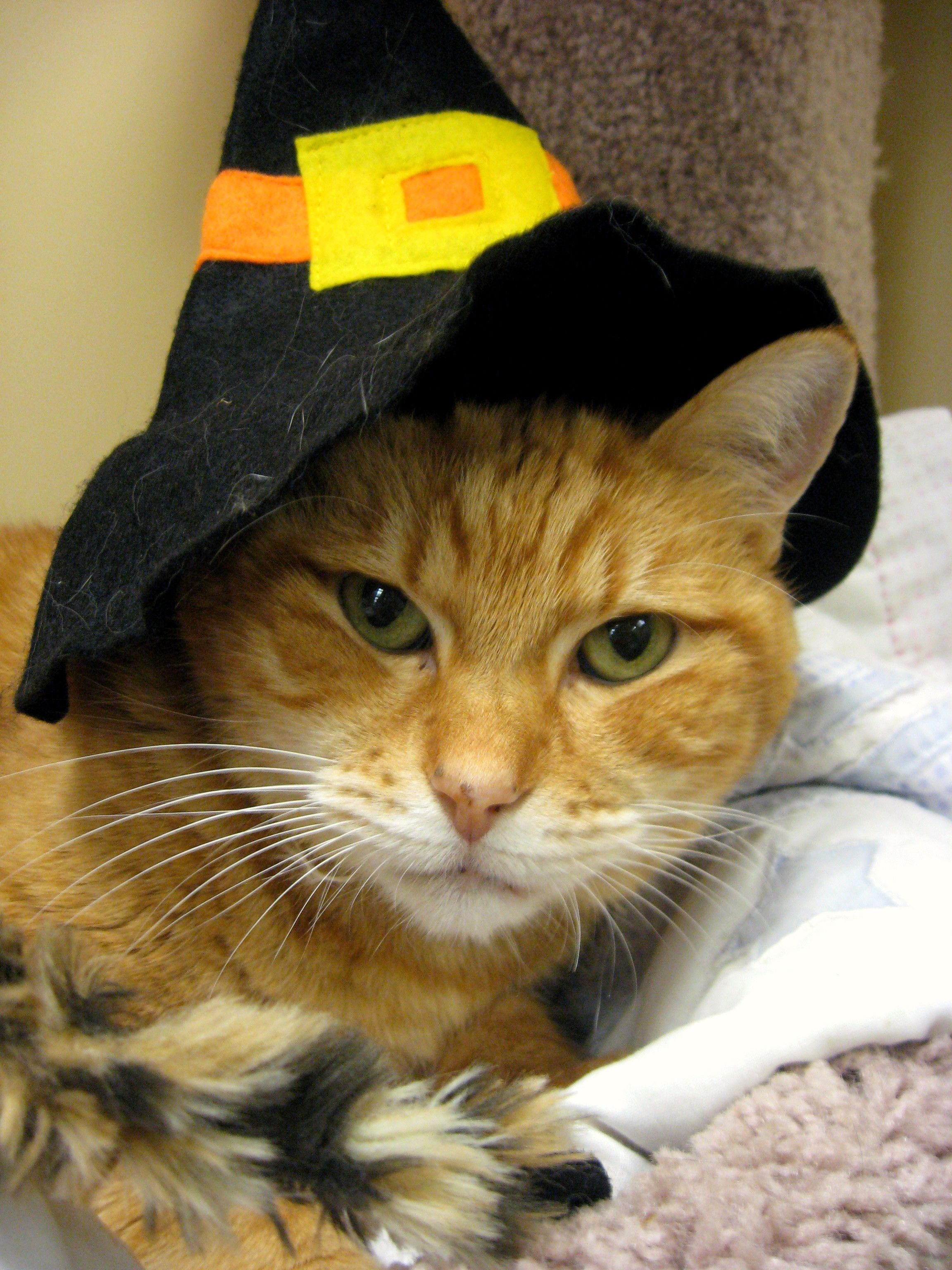 Pin by Valerie McMullen on Halloween Cats Funny cat