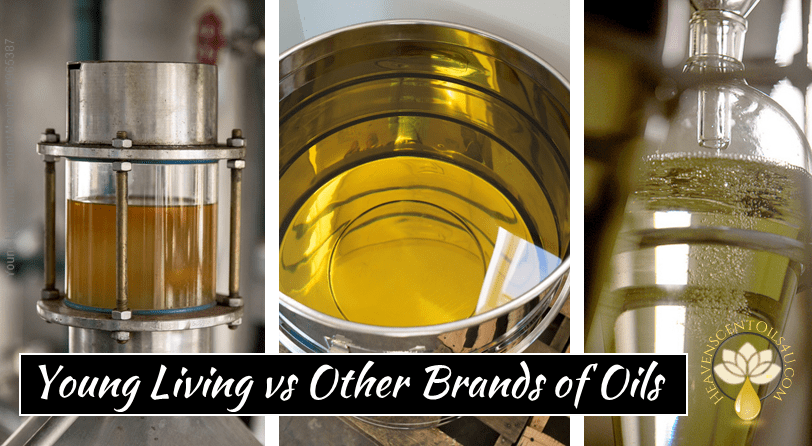 Young Living vs Other Brands of Oils Essential oil