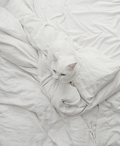 White cat on white sheets