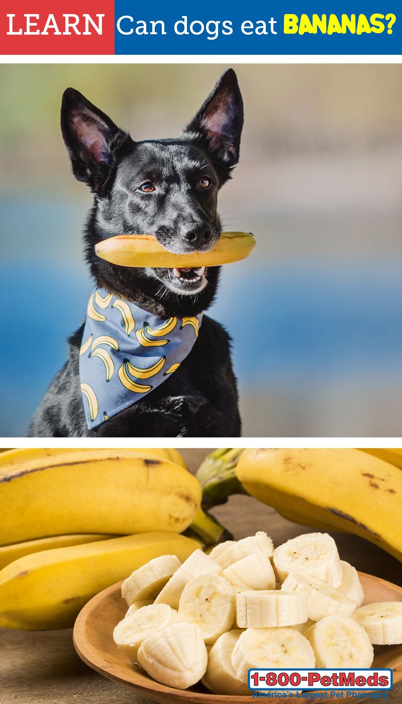Bananas are a great fruit to give to dogs as a healthy