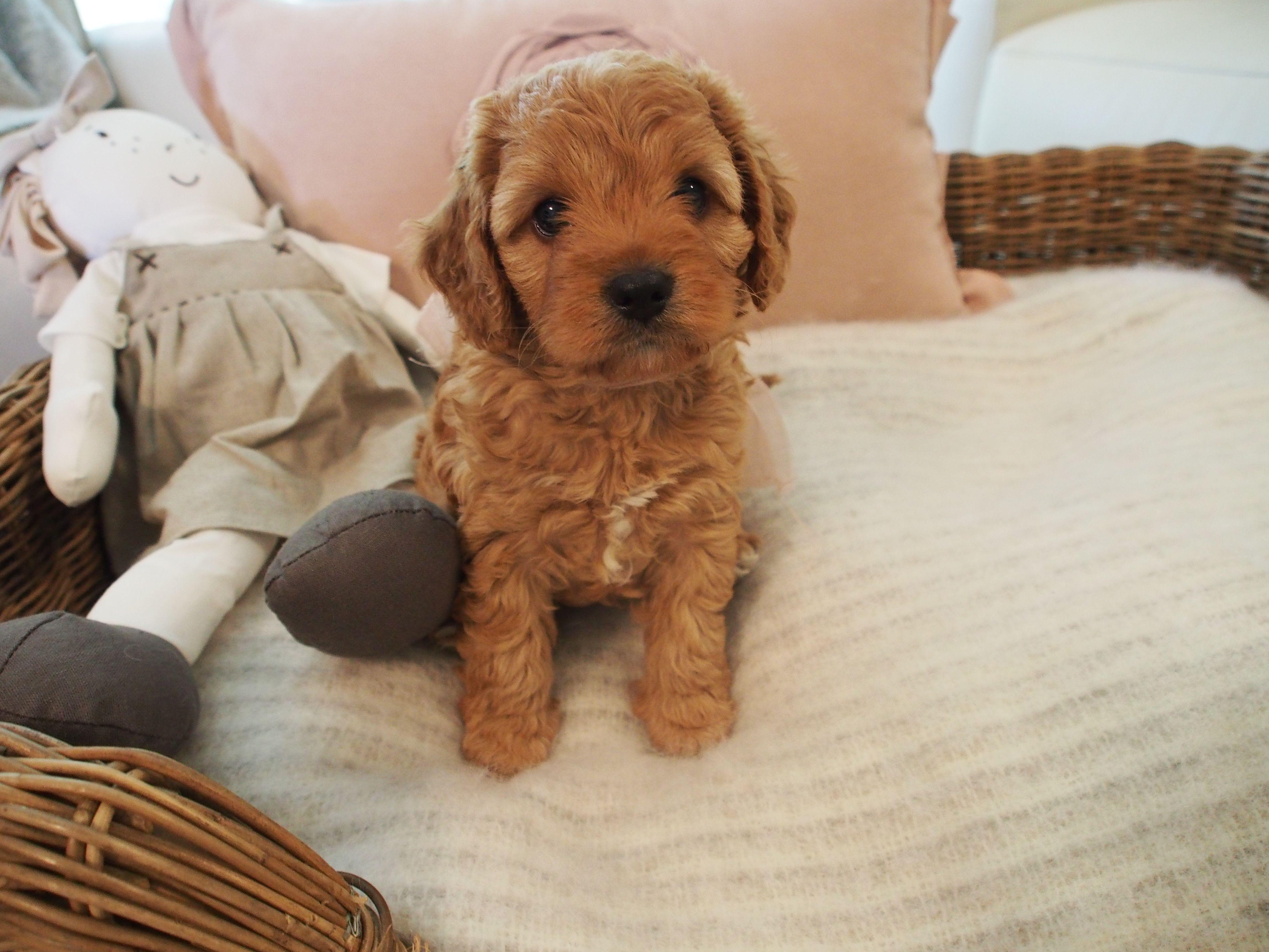 Pin By 𝒄𝒉𝒍𝒐𝒆 𝒔𝒂𝒍𝒗𝒂 On ᴄᴏᴍᴘᴀɴɪᴏɴs Dogs Puppies Collie
