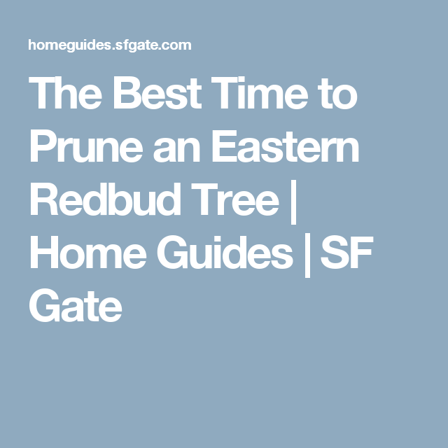 The Best Time To Prune An Eastern Redbud Tree Tub