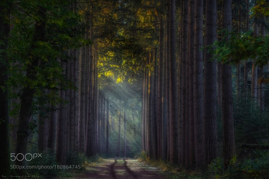 Sun Harps to play on… by JanHermanVisser