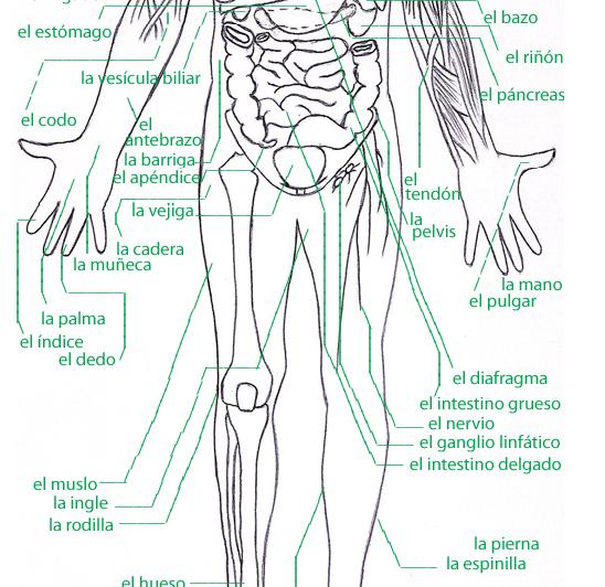 medical spanish   blog about applications of Joseph Pilates' methology