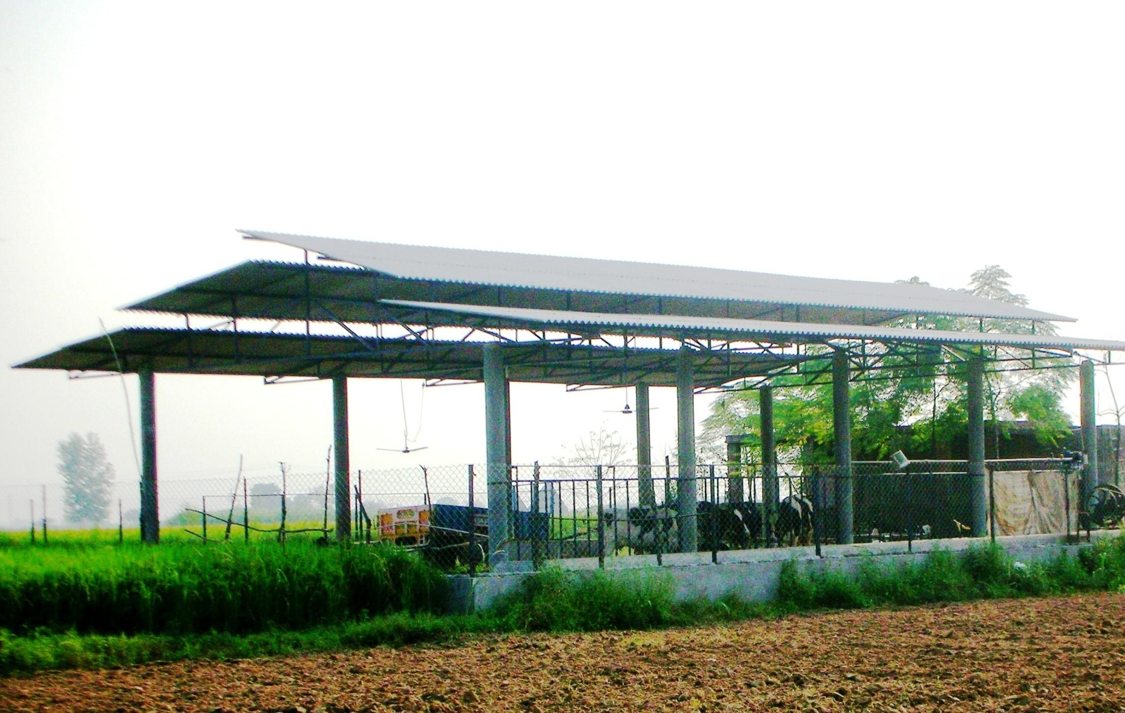 Modern cattle sheds punjabarchitect sarbjit singh bahga chandigarh punjab is an agrarian state and milk production as an integral part of agriculture