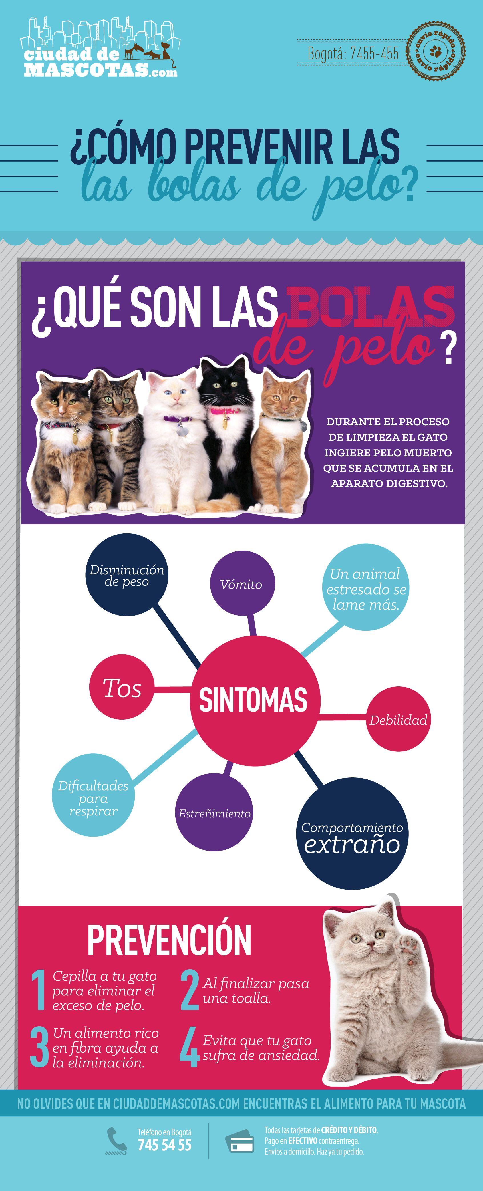 Ciudaddemascotas Com Alimentos Y Más Productos Para Perros Y Gatos Gatos Perros Productos Para Perros