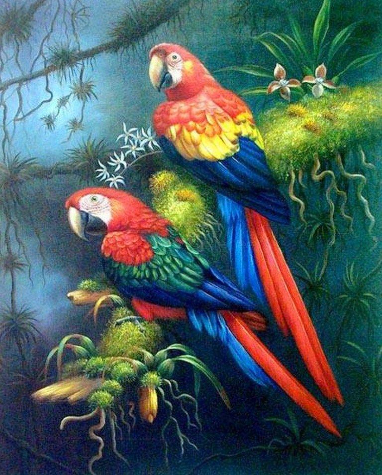 Resultado De Imagen Para Guacamayas птицы Pinturas De Aves