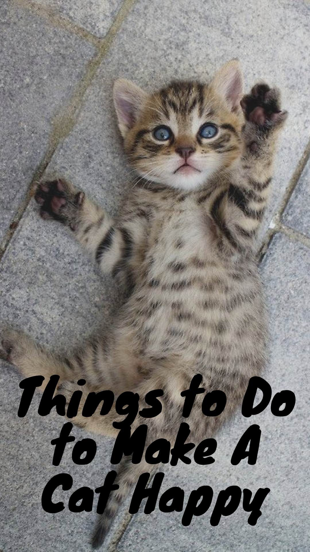 7 Things to Do to Make A Cat Happy in 2020 (With images