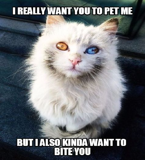 70 Most Hilarious White Cat Meme Funny White Cat Images Funny Cat Memes White Cat Meme Funny Animals