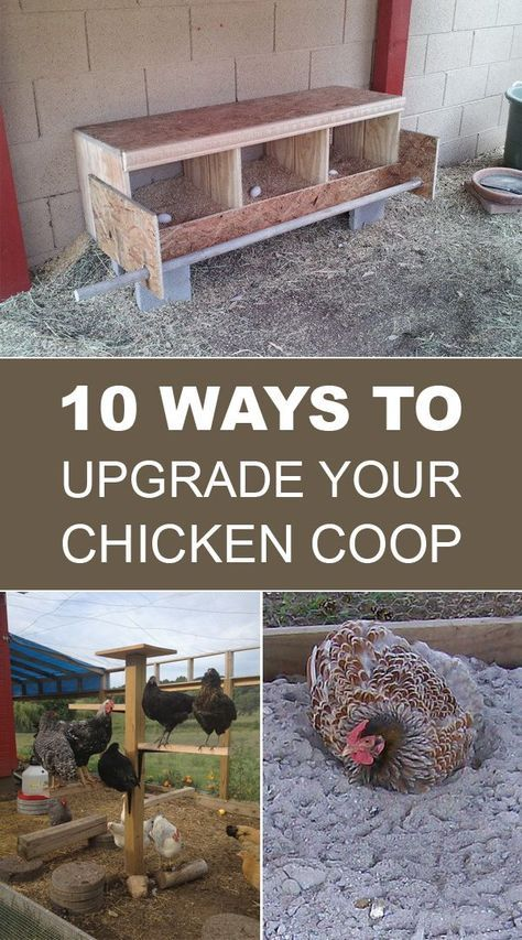 10 Ways To Upgrade Your Chicken Coop is part of Chicken coop, Raising chickens, Backyard chicken coops, Diy chicken coop, Chickens backyard, Portable chicken coop - Here you can find some great ideas to upgrade your chicken coop and enhance your chicken's comfort level