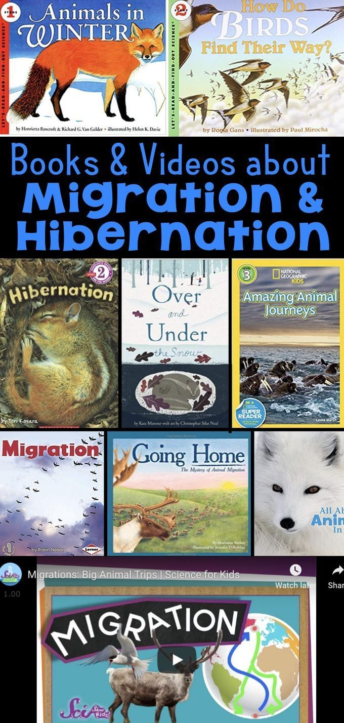 What Animals Do in Winter Books and Videos about