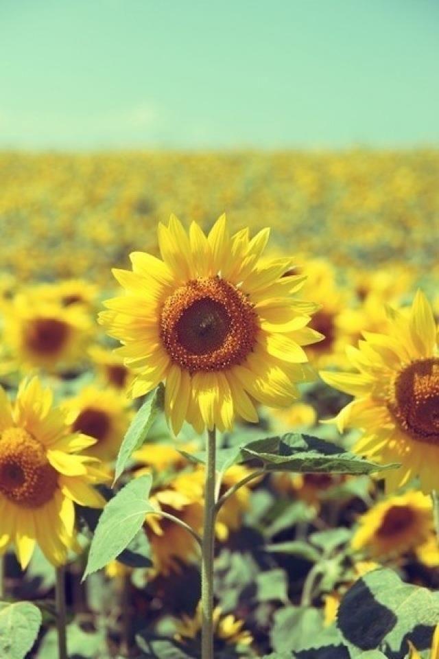 Yellow Monday Top Ten Flowers