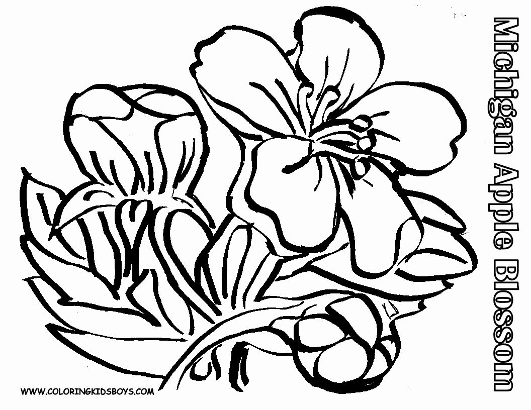18+ Cherry blossom flower coloring pages info