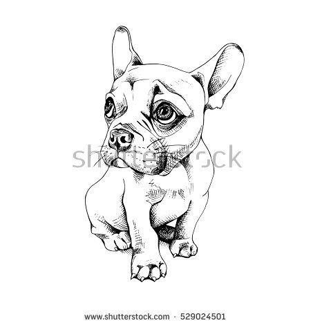 French Bulldog Puppy Vector Black And White Illustration