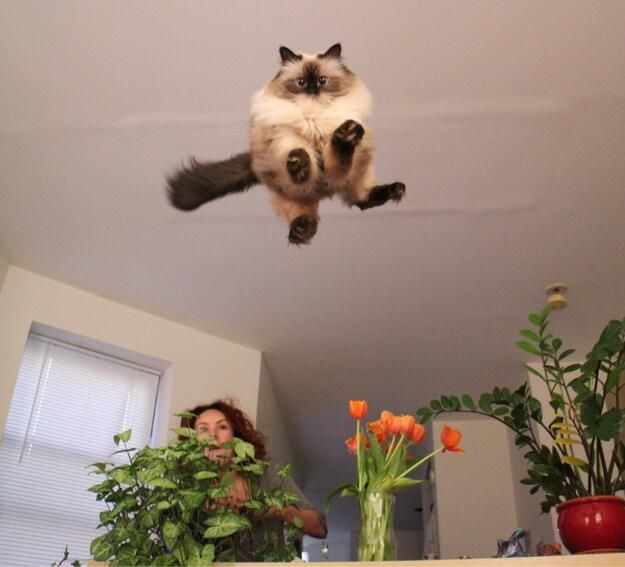 Iconic photo of the first cat in flight.