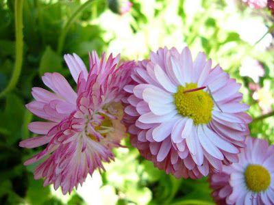 தம ழ கவ த கள தம ழ ப த கவ த Tamil Kavithaigal Tamil Kavithai Tamil Poetry Rare Flowers Flowers Tamil Kavithaigal