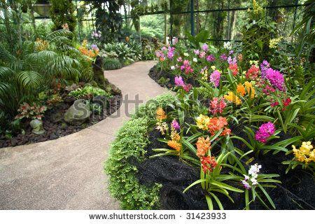 Beautiful Orchids At The Botanical Gardens Singapore Description
