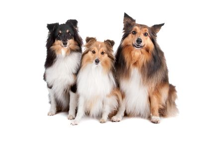 Cute Male And Female Dog Names With