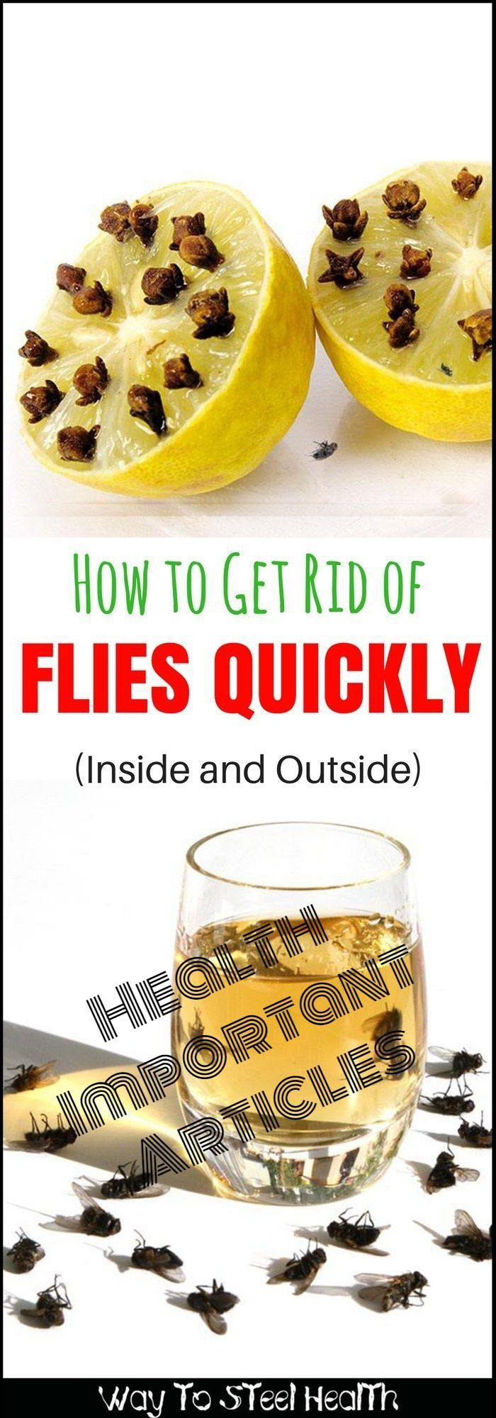 How to get rid of flies quickly inside u outside diy house