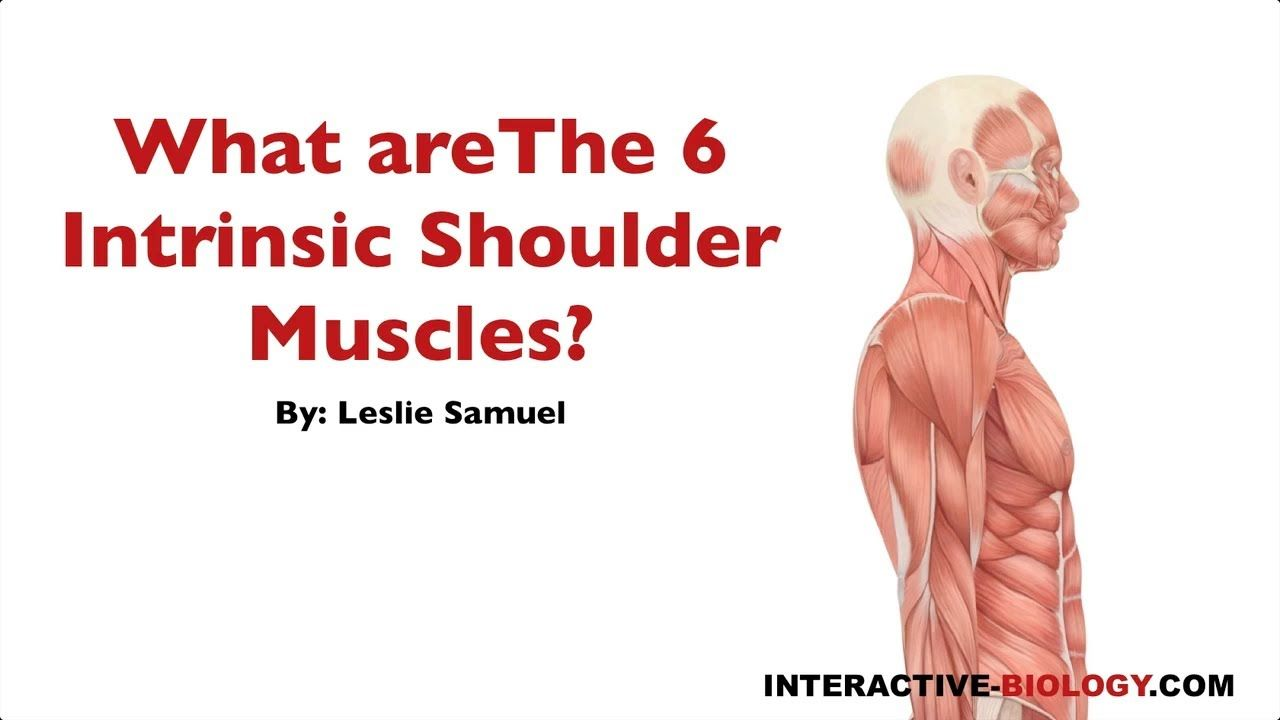 089 What are the Six Intrinsic Shoulder Muscles